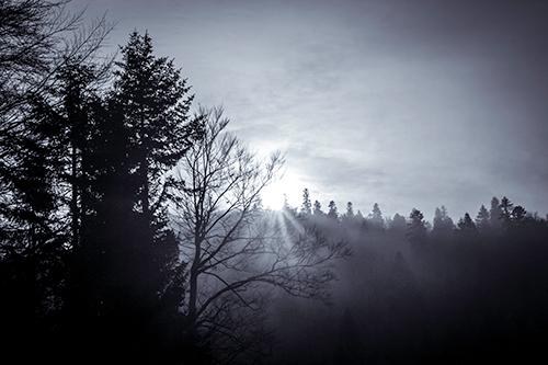 Lumina prevesteste Iarna - Studiu II
