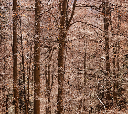 Awaiting Winter - winter, trees, photography, whispers of trees