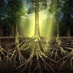 plantele comunica prin fungi, plante, fungi