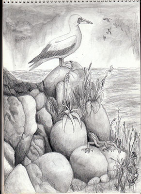 the mariner, nature, nature's serendipity, serendipity, serendipities, natural world, sula bassana, gannet, lizard