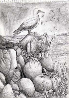 the mariner, nature, nature's serendipity, serendipity, serendipities, natural world, sula bassana, gannet, lizard, animal, life