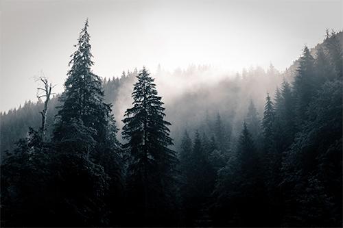 Good Morning Trees - Study I - woods, woodland, forest, morning, light, photography, nature, fine-art