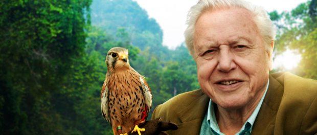 "David Attenborough – Oamenii ""depind in mod crucial"" de sanatatea mediului natural"