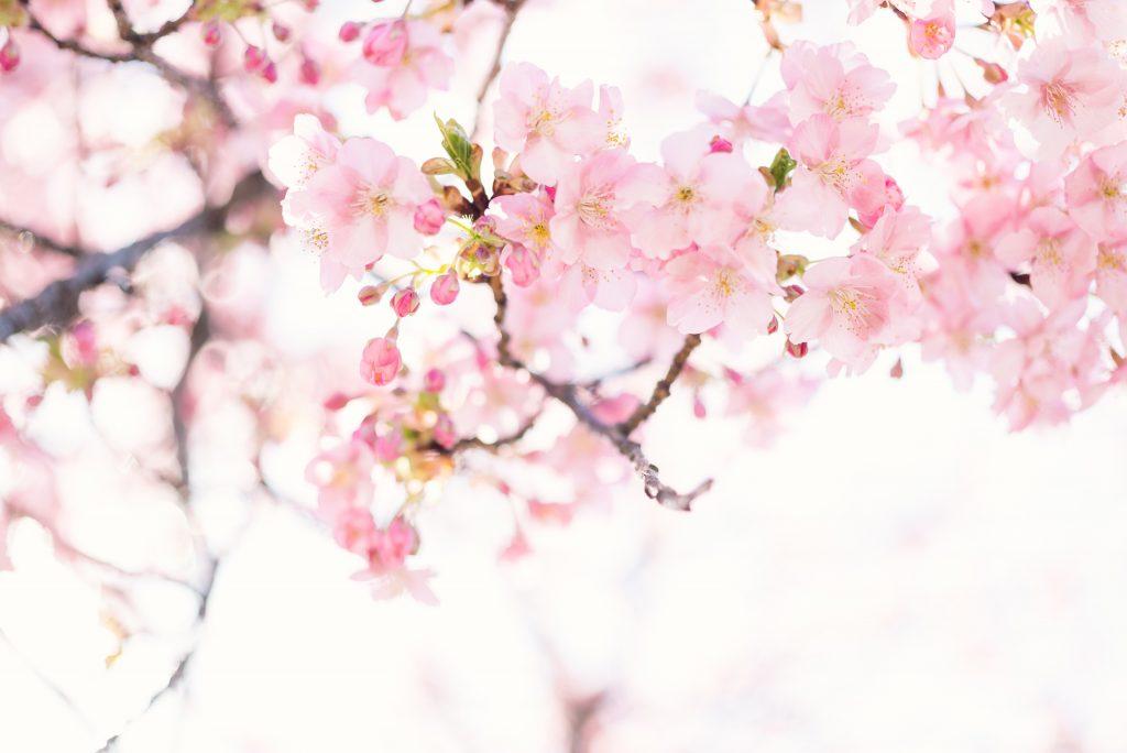 wabi sabi, arta japoneza, cultura japoneza