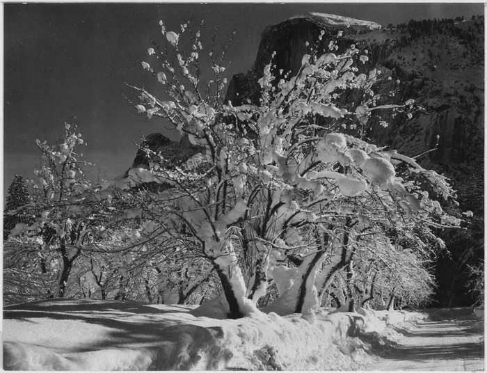 ansel adams, fotografie, fotografia de peisaj, copac
